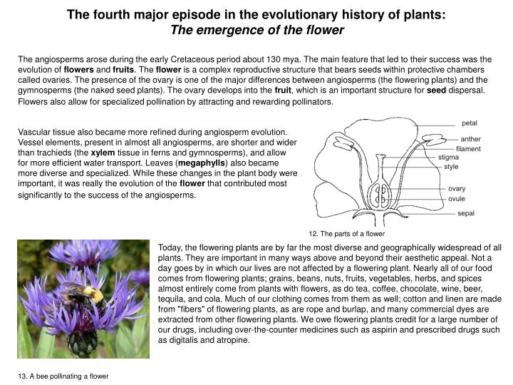 The fourth major episode in the evolutionary history of plants: