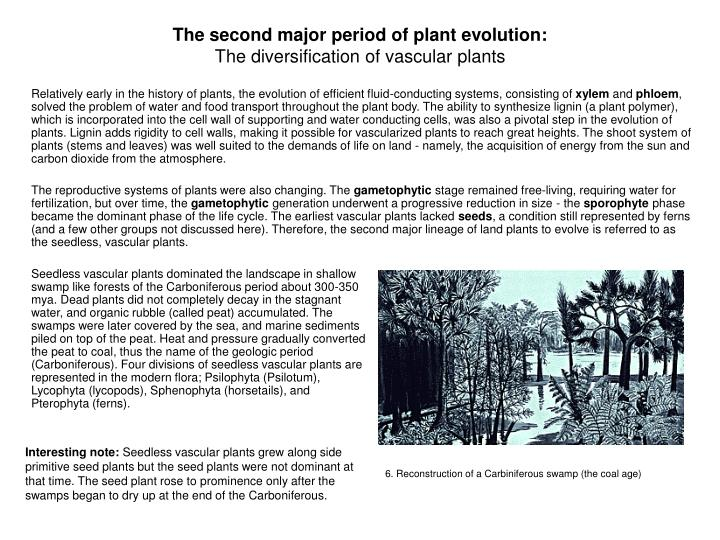 The second major period of plant evolution: