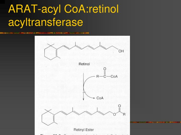 ARAT-acyl CoA:retinol acyltransferase