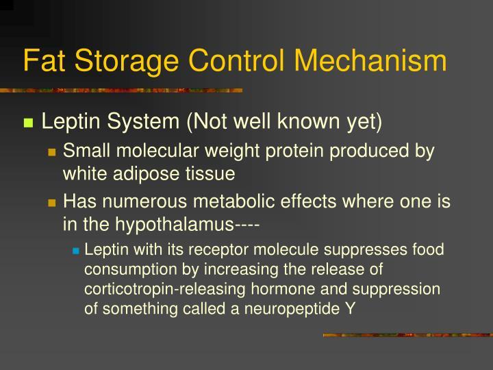 Fat Storage Control Mechanism
