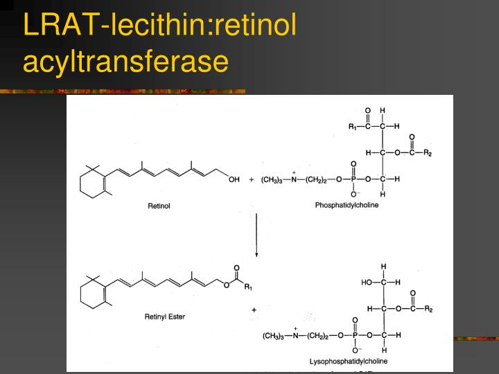 LRAT-lecithin:retinol acyltransferase