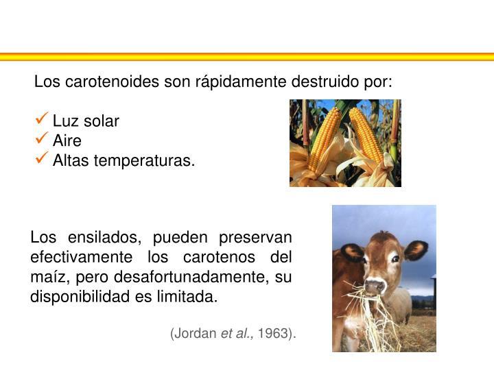 Los carotenoides son rápidamente destruido por: