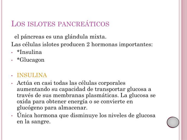 Los islotes pancreáticos