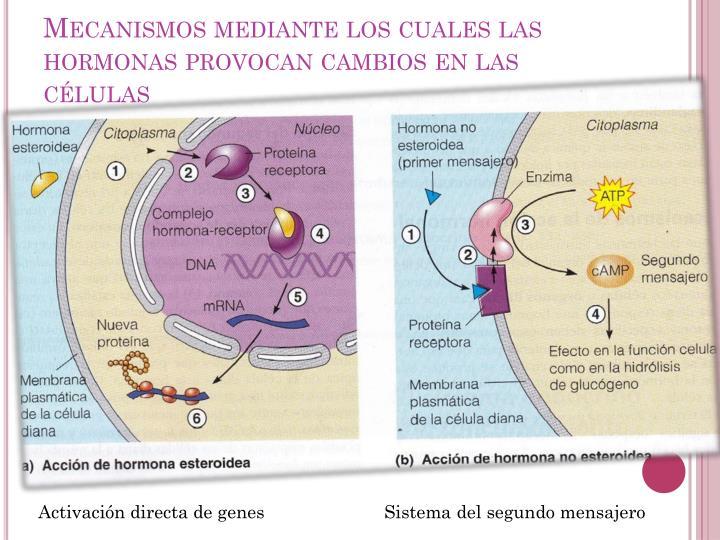 Mecanismos mediante los cuales las hormonas provocan cambios en las células