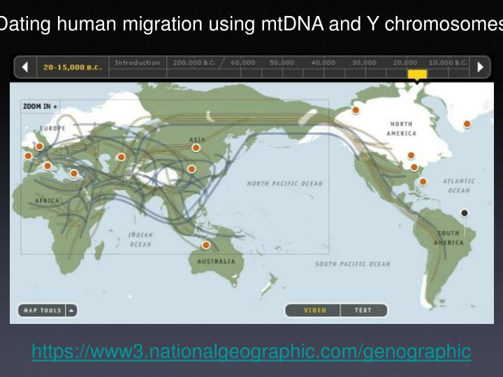 Dating human migration using mtDNA and Y chromosomes