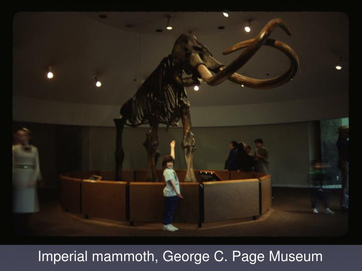 Imperial mammoth, George C. Page Museum
