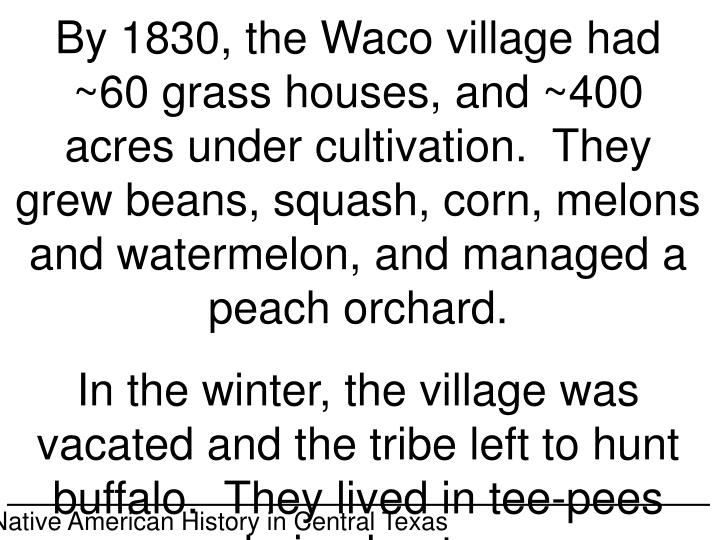 By 1830, the Waco village had ~60 grass houses, and ~400 acres under cultivation.  They grew beans, squash, corn, melons and watermelon, and managed a peach orchard.