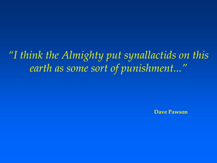 """I think the Almighty put synallactids on this earth as some sort of punishment..."""