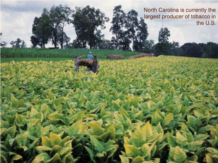 North Carolina is currently the largest producer of tobacco in the U.S