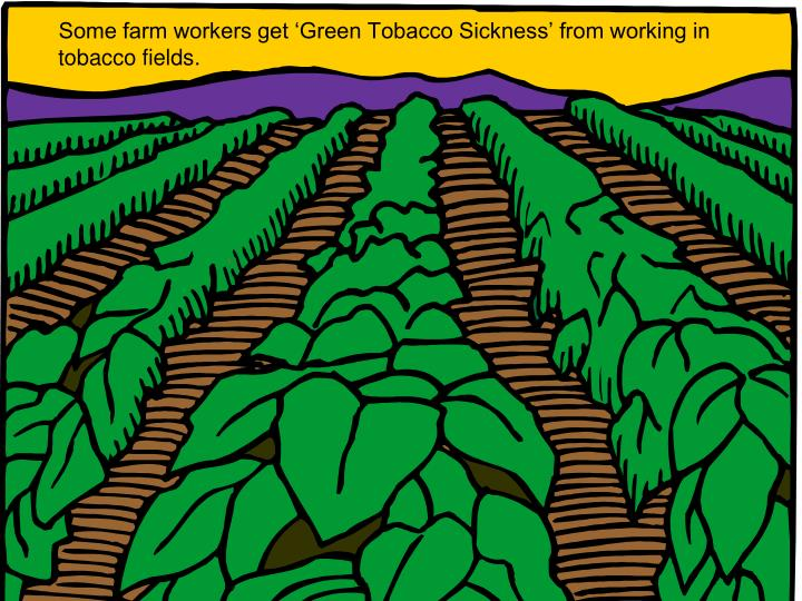 Some farm workers get 'Green Tobacco Sickness' from working in tobacco fields.
