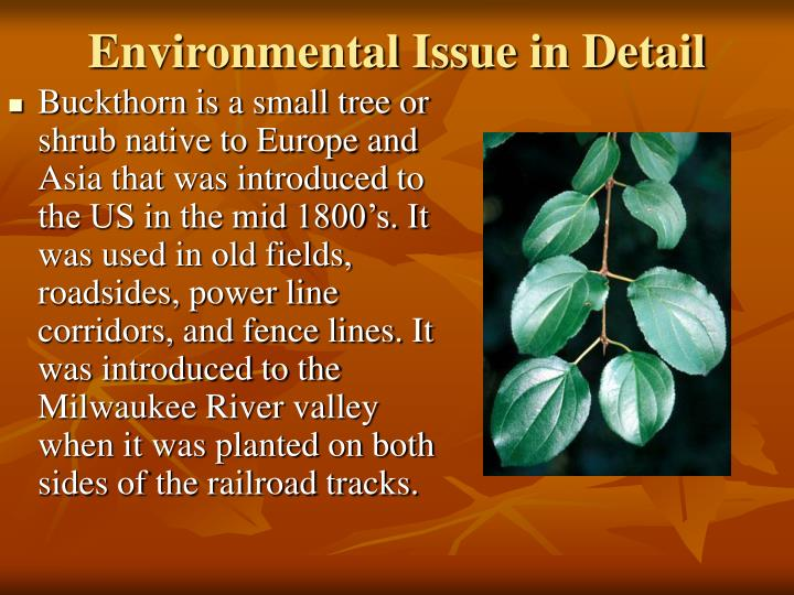 Environmental Issue in Detail