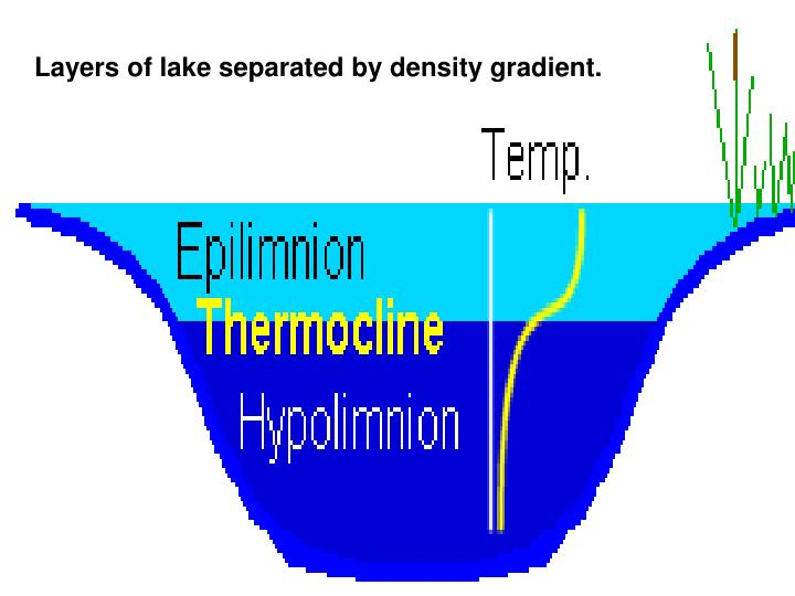 Layers of lake separated by density gradient.