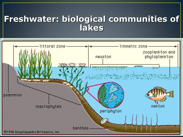Freshwater: biological communities of lakes
