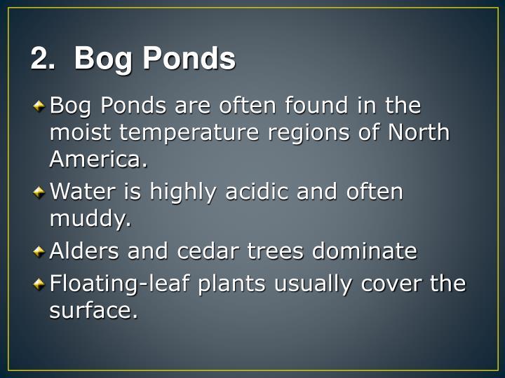 2.  Bog Ponds