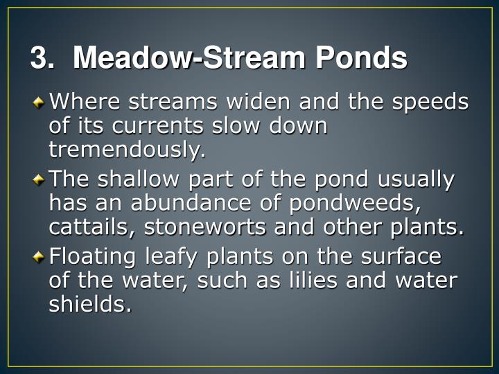 3.  Meadow-Stream Ponds