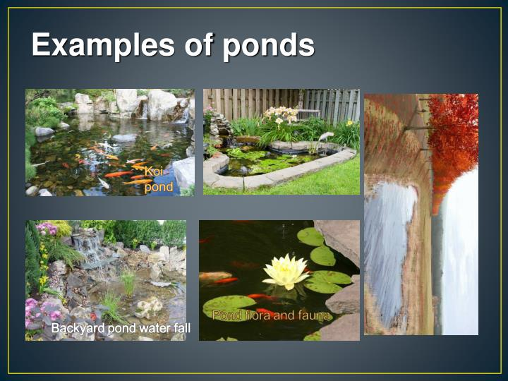 Examples of ponds