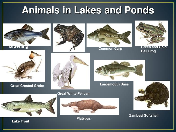 Animals in Lakes and Ponds