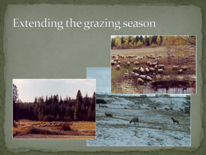 Extending the grazing season