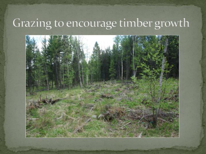 Grazing to encourage timber growth