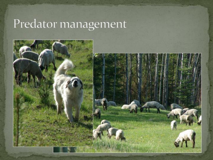 Predator management