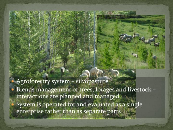 Agroforestry system – silvopasture