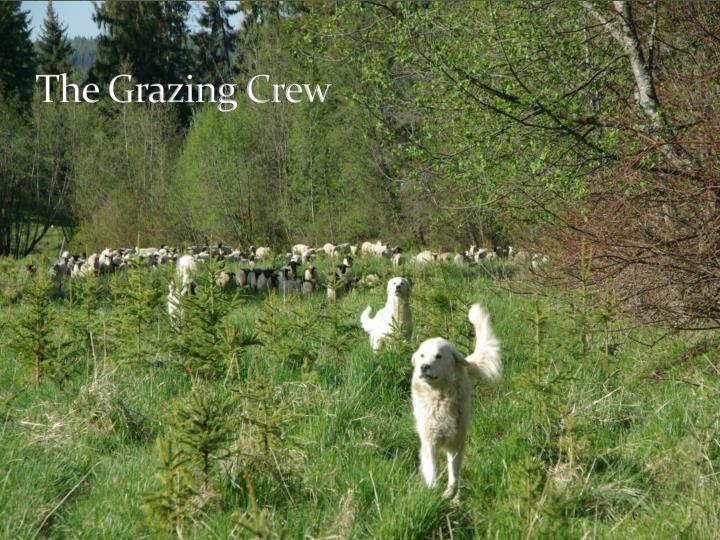The Grazing Crew