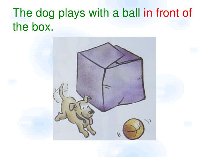 The dog plays with a ball