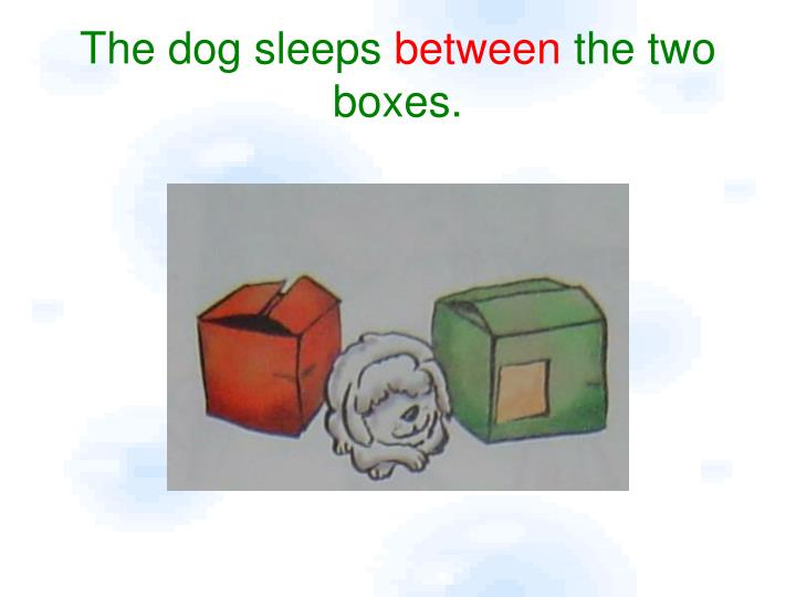 The dog sleeps between the two boxes