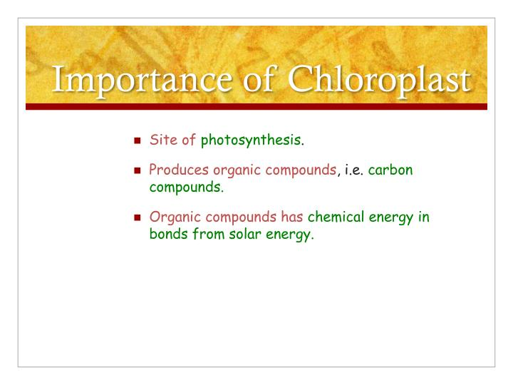 Importance of chloroplast