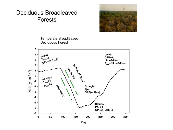 Deciduous Broadleaved Forests