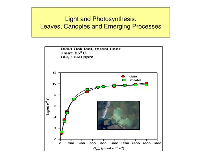 Light and Photosynthesis: