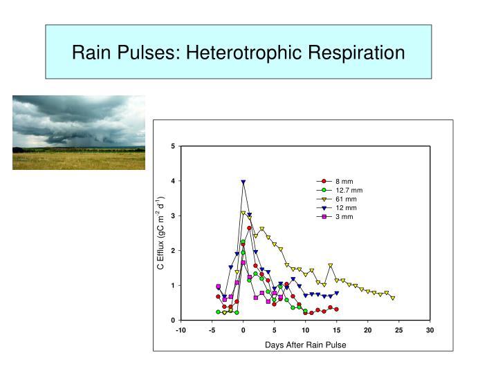 Rain Pulses: Heterotrophic Respiration