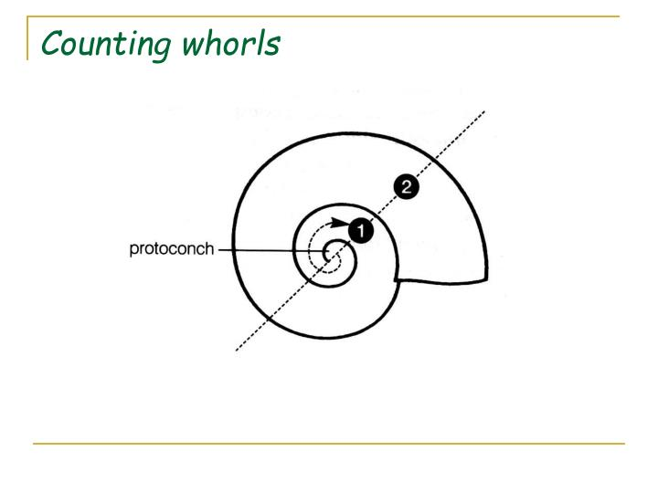 Counting whorls