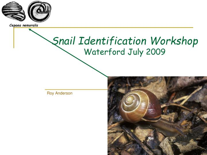 Snail identification workshop waterford july 2009