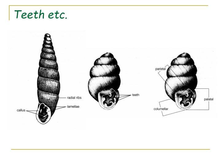 Teeth etc.