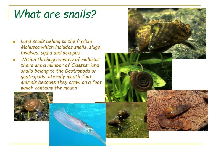 What are snails?