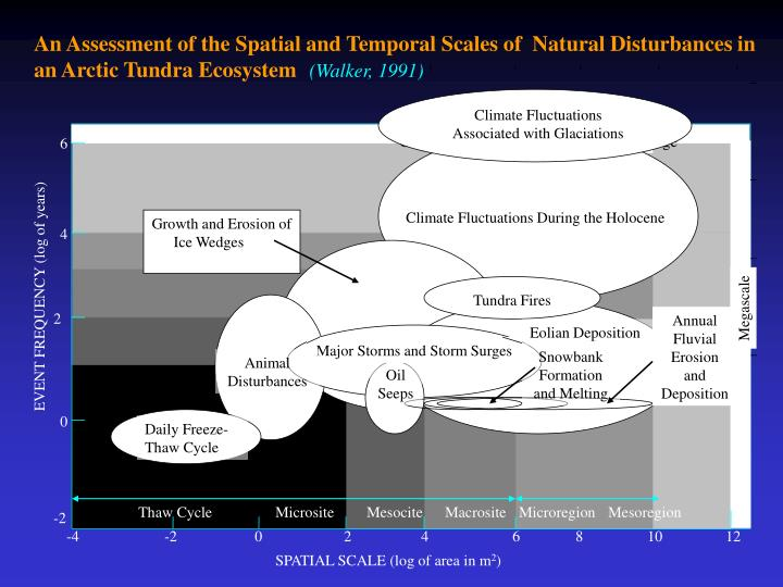 An Assessment of the Spatial and Temporal Scales of  Natural Disturbances in an Arctic Tundra Ecosystem