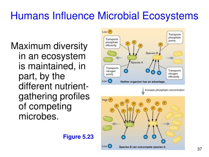 Humans Influence Microbial Ecosystems