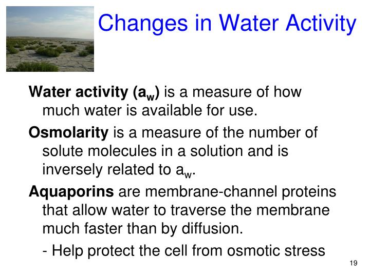 Changes in Water Activity