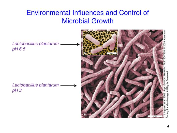 Environmental Influences and Control of Microbial Growth