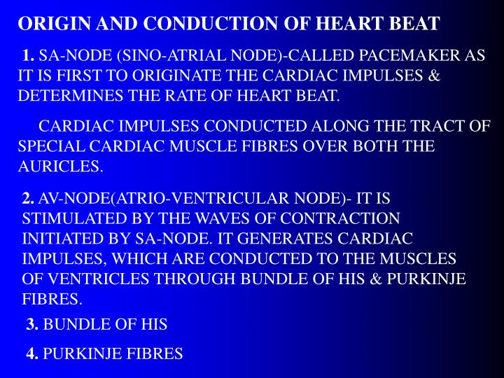 ORIGIN AND CONDUCTION OF HEART BEAT