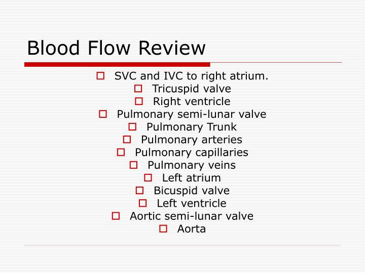 Blood Flow Review