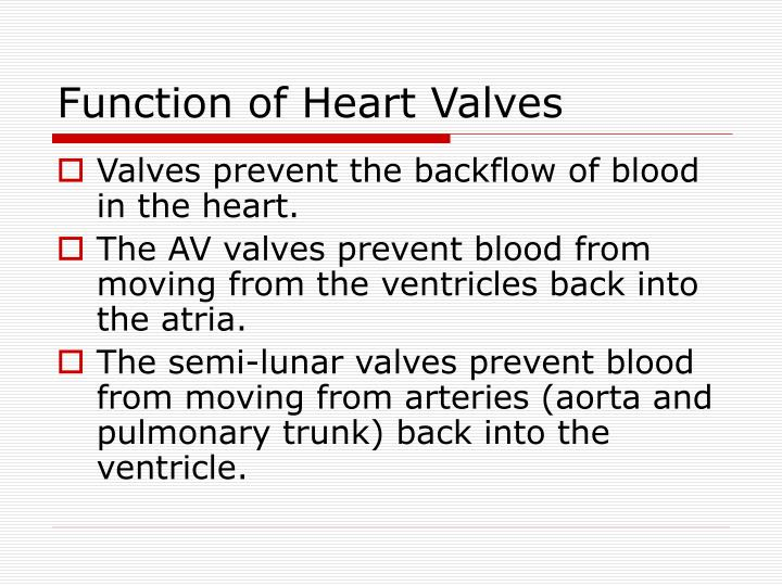 Function of Heart Valves