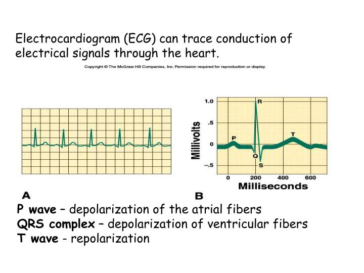 Electrocardiogram (ECG) can trace conduction of electrical signals through the heart.
