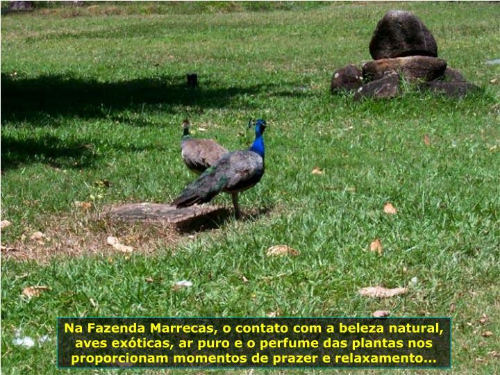 Na Fazenda Marrecas, o contato com a beleza natural, aves exticas, ar puro e o perfume das plantas nos proporcionam momentos de prazer e relaxamento...