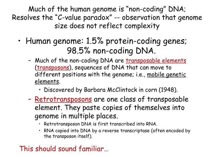 "Much of the human genome is ""non-coding"" DNA;"