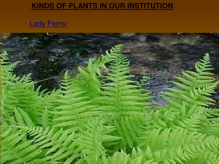 KINDS OF PLANTS IN OUR INSTITUTION