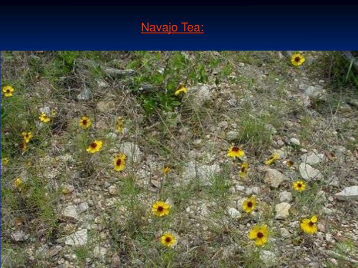 Navajo Tea:
