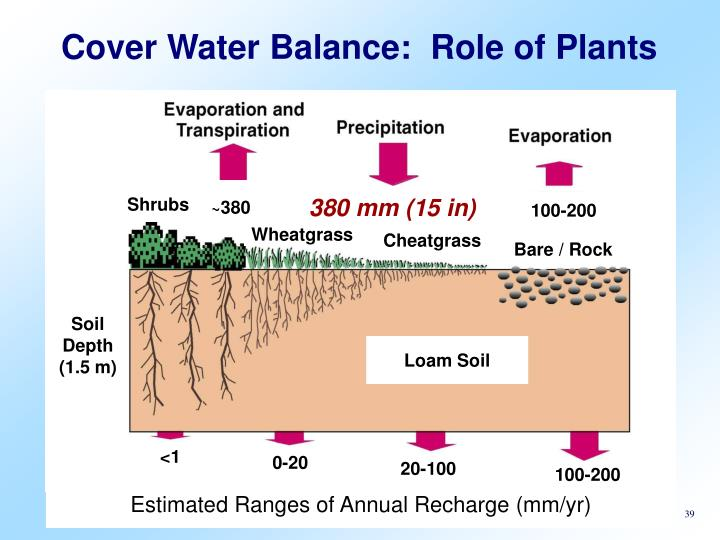Cover Water Balance:  Role of Plants