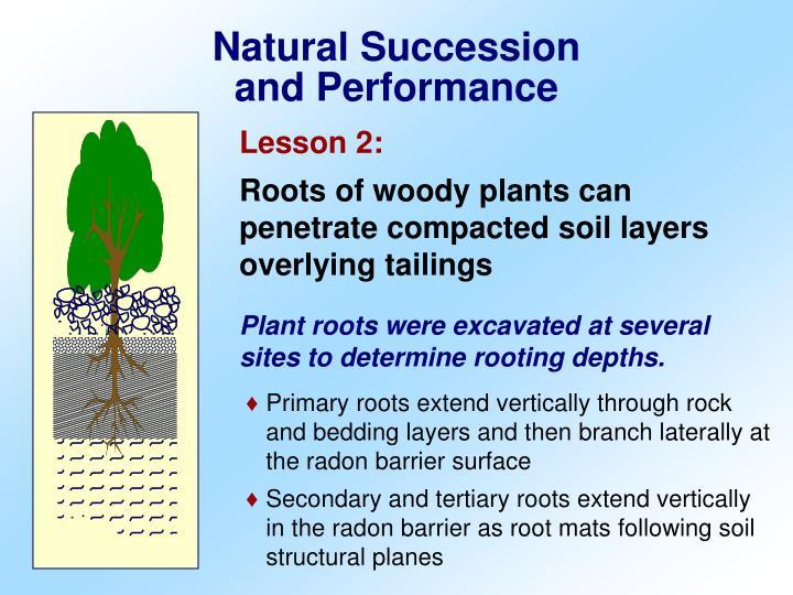 Natural Succession